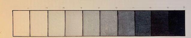 Gray scale--.jpg