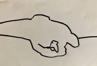 Contour sketch Dog.jpg