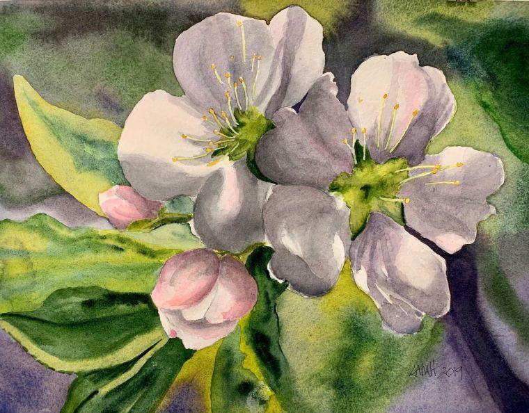 Apple Blossoms LAMH.jpg