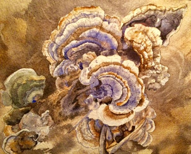 Turkey Tails revised.jpg