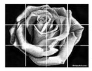 Gridded Rose.jpg