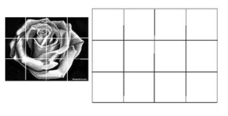 Rose:Grid to enlarge.jpg